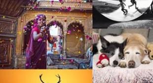 Websta – the best Instagram web viewer online
