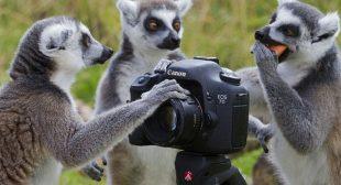 Animal Live Cam
