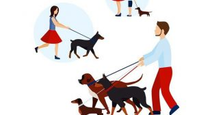 A Perfect Dog Walker for your Loyal Friend: Dogiz App Clone