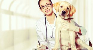 Uber for Vets – Reasons to Incorporate the Solution for Your Pet Care Industry
