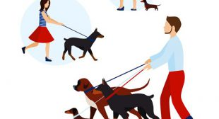 Behaviour and Health of Dogs with on demand dog walking app