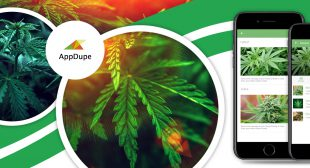 How to offer user-centric services through Marijuana delivery apps?